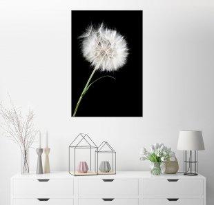 Posterlounge Wandbild »the big white dandelion«