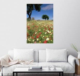 Posterlounge Wandbild - John Miller »Frühlingsblumen, Mallorca«