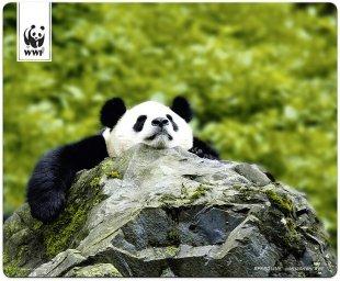 Terra WWF Mousepad Panda