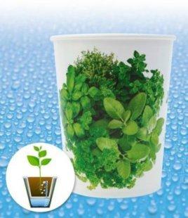 Bewässerungssystem WaterWick® Topfsystem ´´Kräuter-Mix´´, 1 Topf und Bewässerungsdocht
