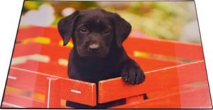 Schreibunterlage - Hund